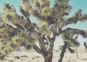 joshua tree jypsy threads